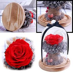Best Gifts for Her, EdC Immortal Eternal Rose Endless Preser